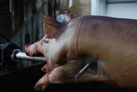 Pig-2-hour